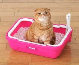 Cat_litter_pan_C_S_C_M
