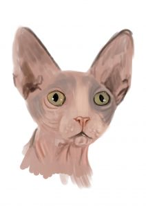 sphynx_cat_color_study_by_trutze-d36w1ai (1)